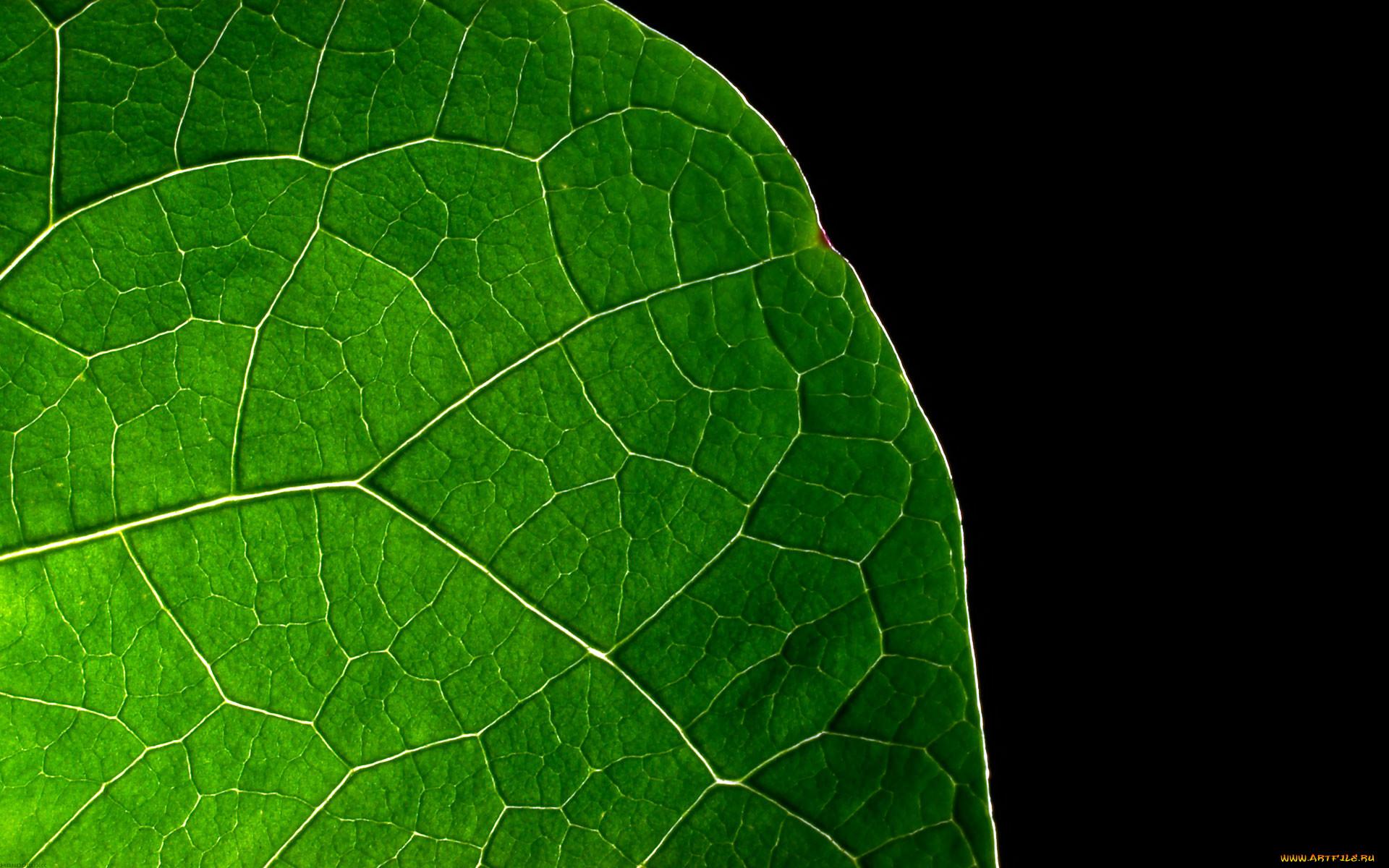 природа, макро, край, кусок, лист, зеленый